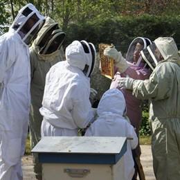 Inscription découverte apiculture