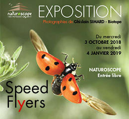 Exposition-Speed-Flyers_actualitehome